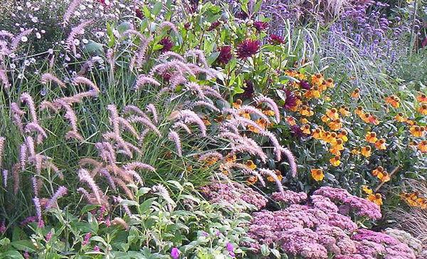 Border planten voorbeelden